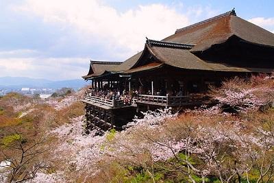 清水寺は桜の花見の名所です。