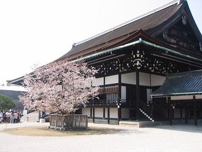 京都御所桜で荘厳な雰囲気を味わいましょう。
