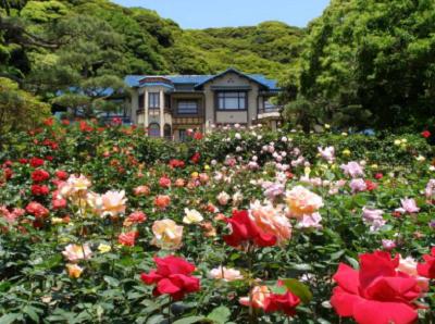 鎌倉文学館バラ園