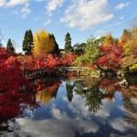 永観堂放生池の紅葉