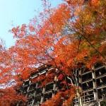 清水寺舞台下の紅葉