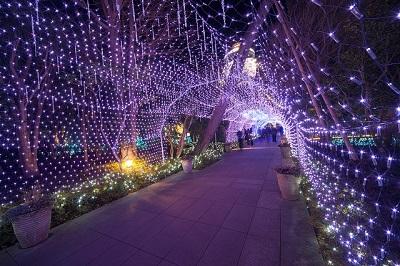 江の島湘南の宝石光のトンネル