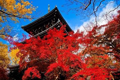 清水寺三重塔の紅葉