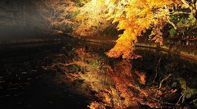 清水寺成就院紅葉