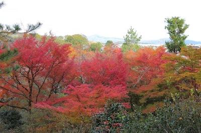 天竜寺望京の丘紅葉