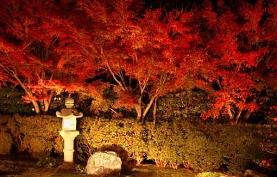 東福寺天徳院紅葉ライトアップ