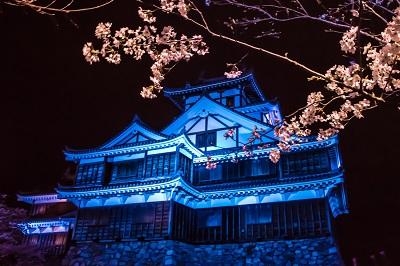 福知山城桜ライトアップ