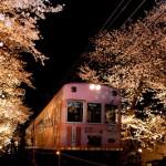 嵐電桜のトンネルライトアップ