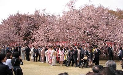 新宿御苑桜を見る会