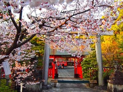車折神社桜