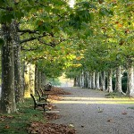 新宿御苑プラタナス並木
