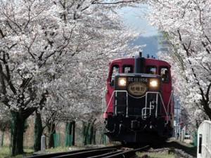 トロッコ列車春